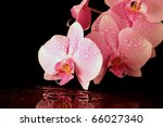 Pink night orchid on black background, valentine concept - stock photo