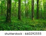 forest green | Shutterstock . vector #660292555