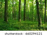 forest green | Shutterstock . vector #660294121