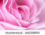 Stock photo pink rose macro 66038890