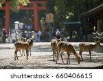 Deer  Nara Park In Japan