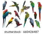 big set of parrot and macaw... | Shutterstock . vector #660426487