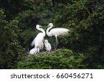 great egret  common egret ... | Shutterstock . vector #660456271