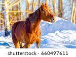 chestnut horse portrait on... | Shutterstock . vector #660497611