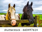 Stock photo black and piebald horses at farm fence portrait front view 660497614