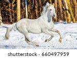 white horse gallop on snow | Shutterstock . vector #660497959