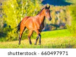 chestnut horse walking in field ... | Shutterstock . vector #660497971