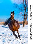 Stock photo chestnut horse gallop on snow field winter landscape front view 660497995