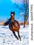 Chestnut Horse Gallop On Snow...