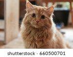 cute domestic cat. | Shutterstock . vector #660500701