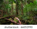 rainforest near the protestor...