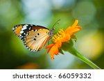 Orange Butterfly On Flower ...