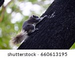 Cute Squirrel Climbing On The...