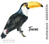 watercolor bird of isolated...   Shutterstock . vector #660643534