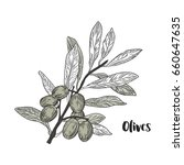 vector drawn olives branch on... | Shutterstock .eps vector #660647635