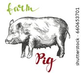 farm  pig hand drawn vector... | Shutterstock .eps vector #660653701