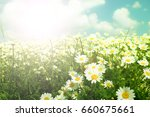daisies wildflowers | Shutterstock . vector #660675661