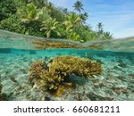 over and under sea surface near ... | Shutterstock . vector #660681211