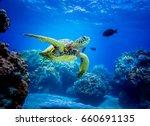 sea turtle | Shutterstock . vector #660691135