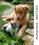 Stock photo best friends domestic cat and golden retriever in a hug 66071263