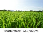 low angle view of fresh grass... | Shutterstock . vector #660732091