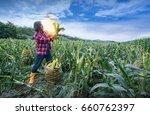 farmer inspect quality of corn  ... | Shutterstock . vector #660762397