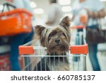 Stock photo cute little puppy dog sitting in a shopping cart on blurred mall background selective focus macro 660785137