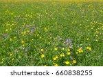 geranium pratense or meadow... | Shutterstock . vector #660838255