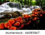 Orange Mushroom With Waterfalls