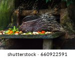 porcupines   porcupines are... | Shutterstock . vector #660922591