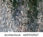 seamless tree bark background.... | Shutterstock . vector #660933067