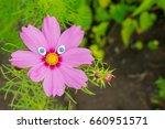 Pink Kosmeya Flower With Toy...