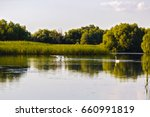 landscape with different birds... | Shutterstock . vector #660991819