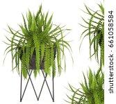3d digital render of fern...   Shutterstock . vector #661058584