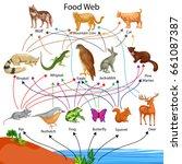 education chart of biology for... | Shutterstock .eps vector #661087387
