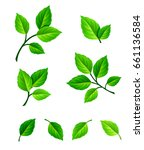 vector set of green leaves and... | Shutterstock .eps vector #661136584
