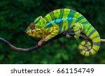 chameleon furcifer pardalis... | Shutterstock . vector #661154749