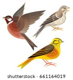 stylized birds   pine bunting... | Shutterstock .eps vector #661164019