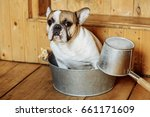 french bulldog does not want to ... | Shutterstock . vector #661171609