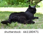 black cat resting in a shady... | Shutterstock . vector #661180471