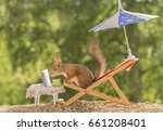 red squirrel  on a chair under... | Shutterstock . vector #661208401