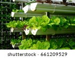vegetables are grown using... | Shutterstock . vector #661209529