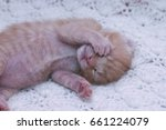 Stock photo small ginger cat kitten kitten sleeping domestic cat newborn kitten orange kitten one week old 661224079