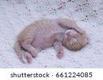 Stock photo small ginger cat kitten kitten sleeping domestic cat newborn kitten orange kitten one week old 661224085