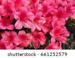 azalea | Shutterstock . vector #661252579