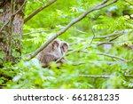 Two Monkeys Relaxing In The...