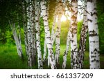 birch grove at dawn | Shutterstock . vector #661337209