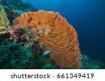 giant sea fan on a coral reef... | Shutterstock . vector #661349419