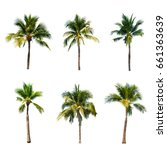 coconut tree on white... | Shutterstock . vector #661363639