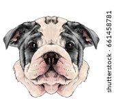 dog breed american bulldog head ... | Shutterstock .eps vector #661458781